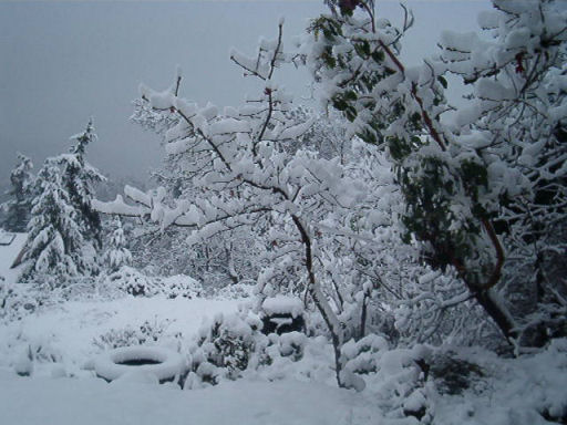 dark-day-of-winter