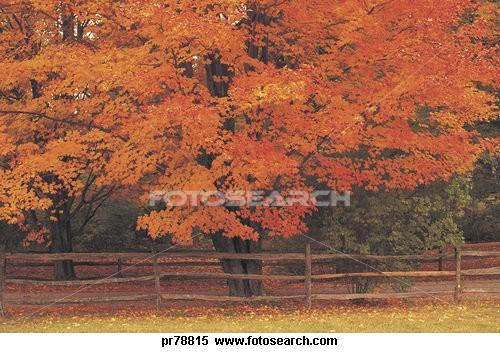 fall pics 2