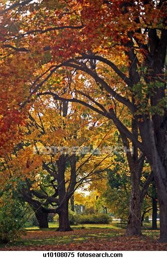 fall pics