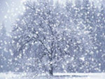 snowtreesgood1-s