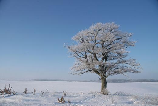 winter_oak