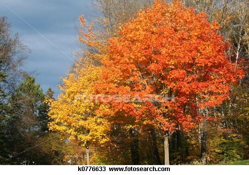 fall pics 3