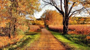 autumn-country-road_650x366