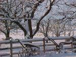winter_backyard