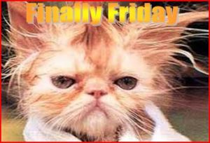 finally-friday-cat1