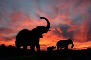 94b4a694-223b-48d3-8585-f372aaaa601a_Serengeti National Park