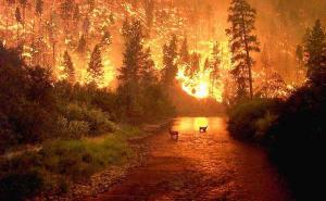 fire at Yosemite National Park (Bitterroot National Park)