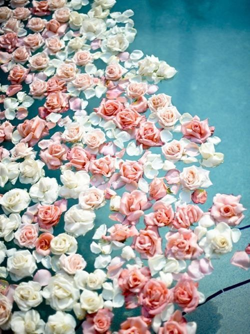 158588-roses-floating-in-water