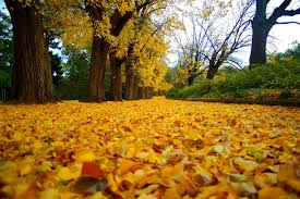 fall leaves three