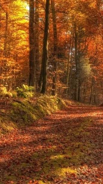 beautiful fall (2)
