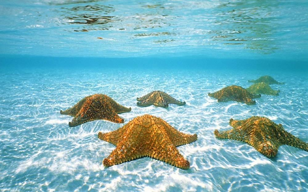34695-sea-and-beach-ocean-life